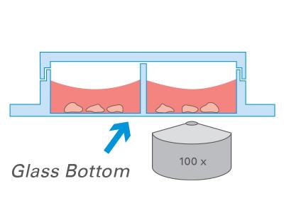 µ-Slide 2 Well Glass Bottom