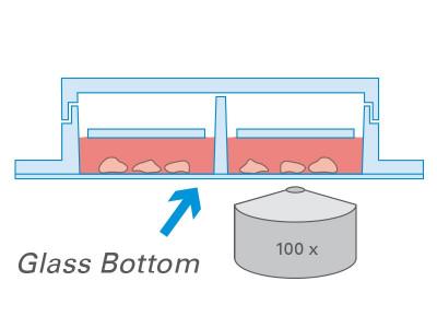 µ-Slide 2 Well Ph+ Glass Bottom