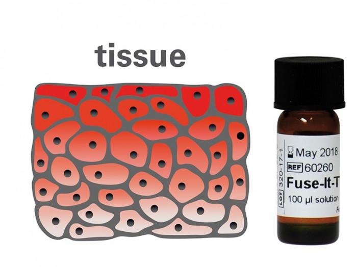 Fuse-It-T