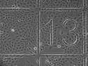 µ-Dish 35 mm, low Grid-500