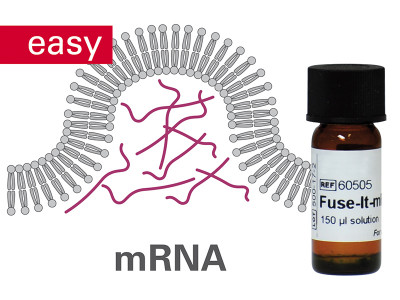 Fuse-It-mRNA easy