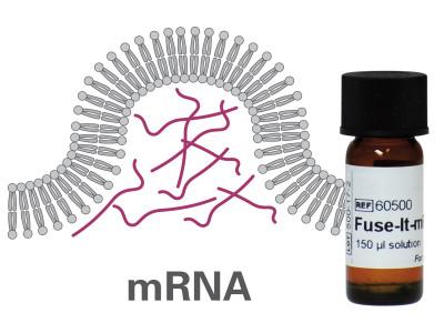 Fuse-It-mRNA