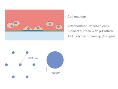 µ-Slides With Multi-Cell µ-Pattern
