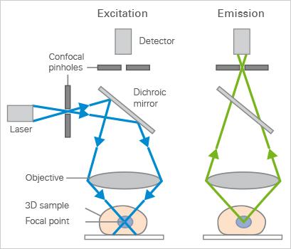 Confocal Microscopy Principle Applications Ibidi