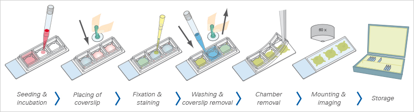 how to clean slides after mounting coverslip