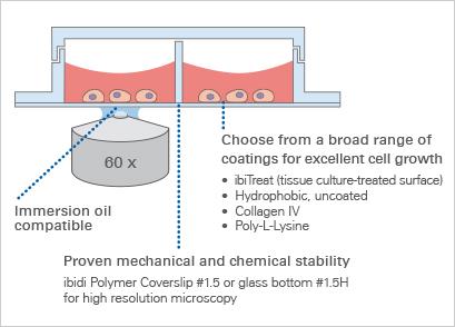 µ-Slide 8 Well | Chambered Coverslip for Cell Imaging | ibidi