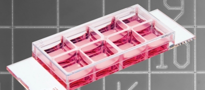 ibidi Product News: ibidi µ-Slide 8 Well Grid-500: Track down your cells in a µ-Slide 8 Well